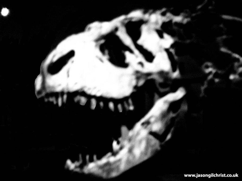 Trix - Tyrannosaurus rex skull - gothic version