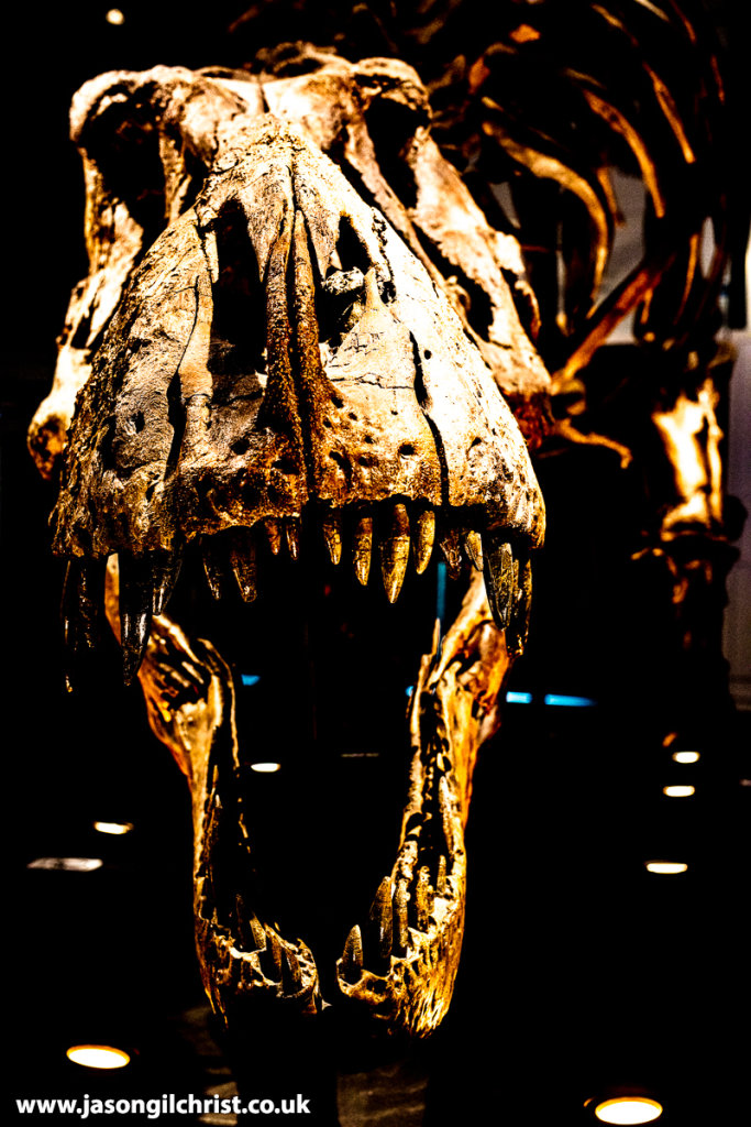 A Face Full of T. rex: Trix, Tyrannosaurus rex, Kelvin Hall, Glasgow