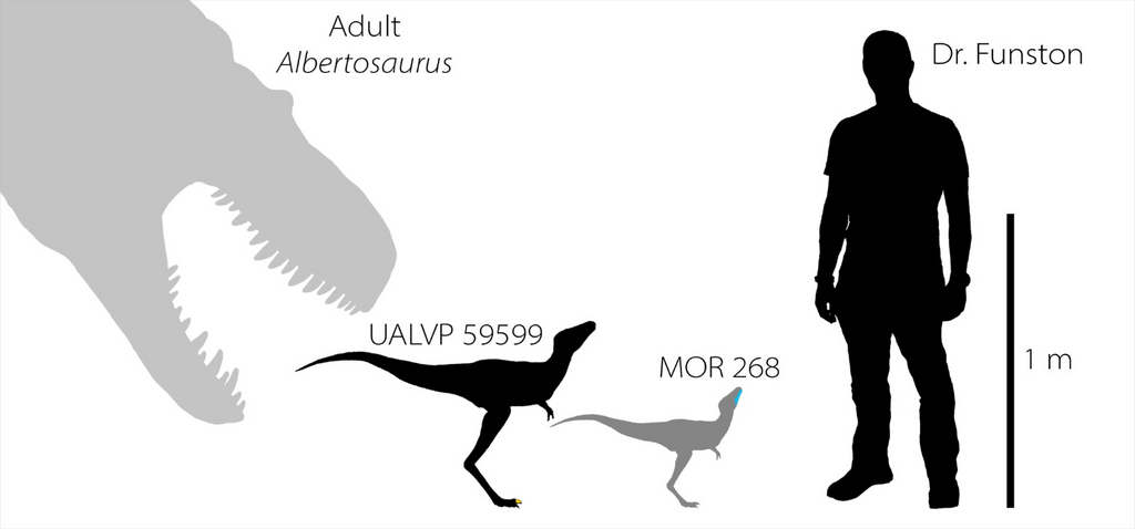 Baby tyrannosaurs