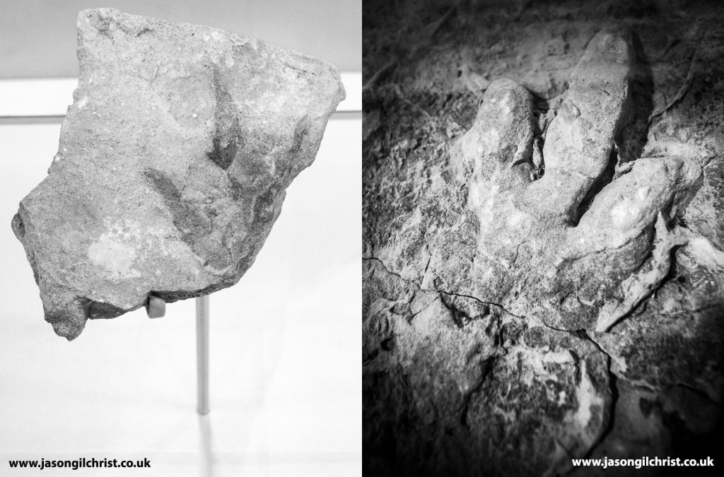 Baby theropod dinosaur footprint within adult footprint. Trackway of a family of theropod dinosaurs? From the Isle of Skye, Scotland