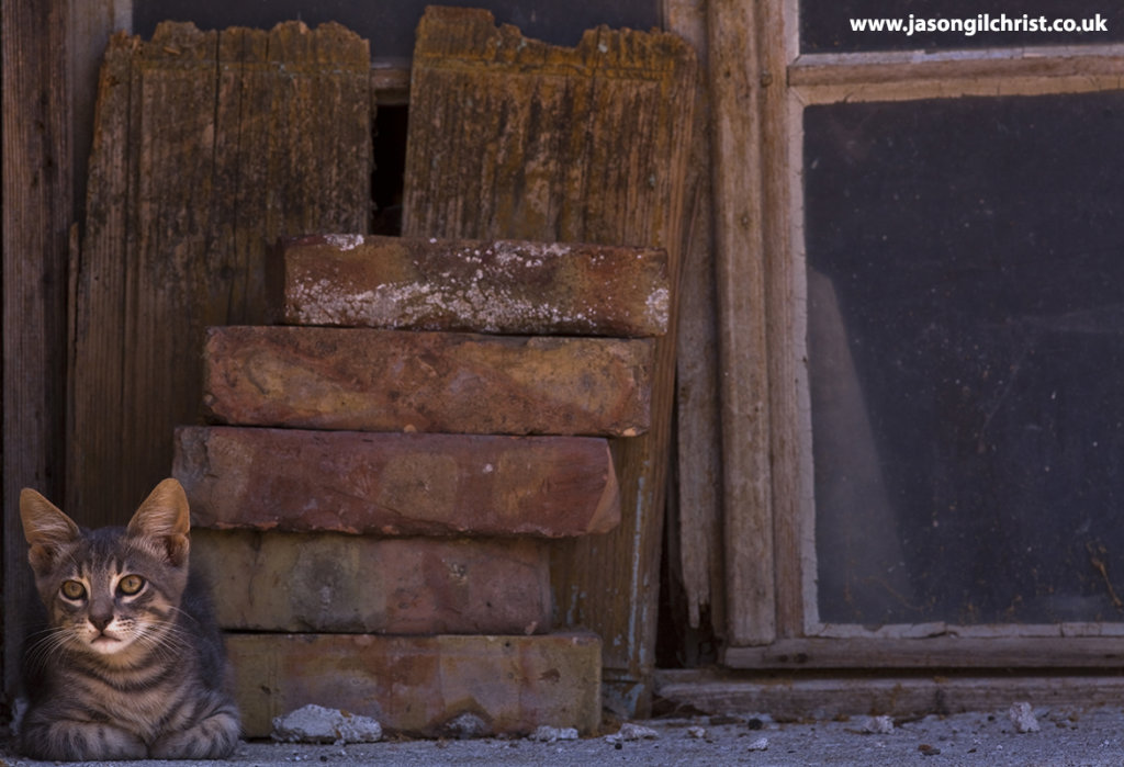 Domestic or feral cat by bricks and window, Croatia