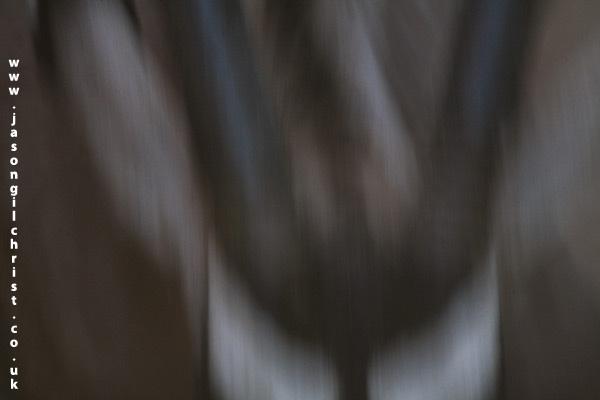 Flying gemsbok