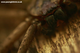 Up close and personal with the hairy spider