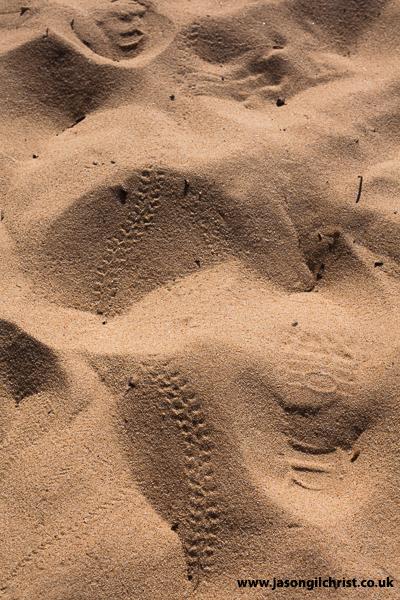 Millipede trackway, Praia da Gale