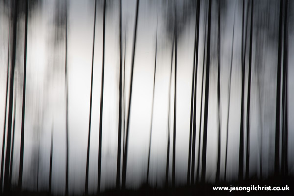 Silhouetted pine trees of the Black Wood of Rannoch