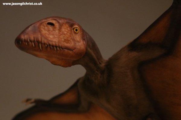 Pterosaur in-flight