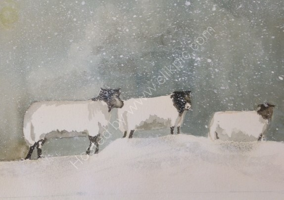 Three sheep in winter storm SOLD
