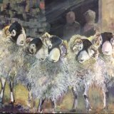 Dancing in the light of the barn - Swaledale sheep