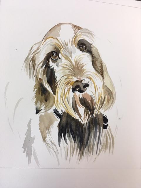 Stanley - watercolour commission