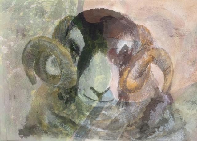 Swaledale ram's head