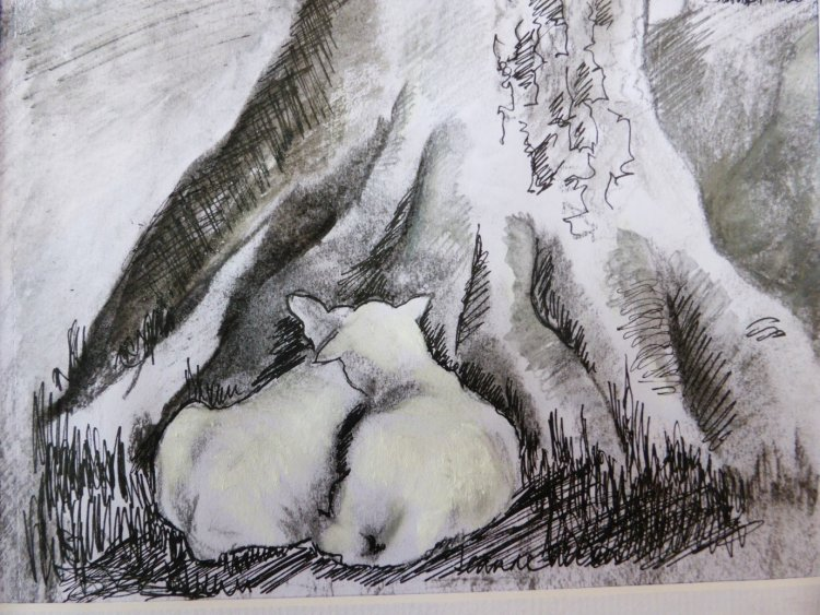 Young Ryeland lambs - pencil, pen and watercolour wash
