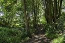 City centre walk in Ouzledale Woods
