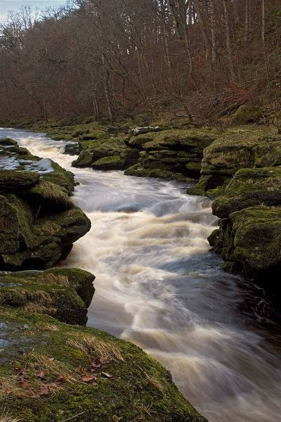 The Strid, Bolton Abbey, The Yorkshire Dales