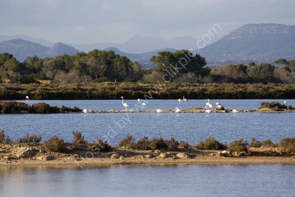 Flamingos at the nature reserve on the SW coast