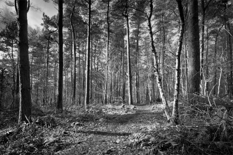Kinsley Wood 6681 Feb 2017-