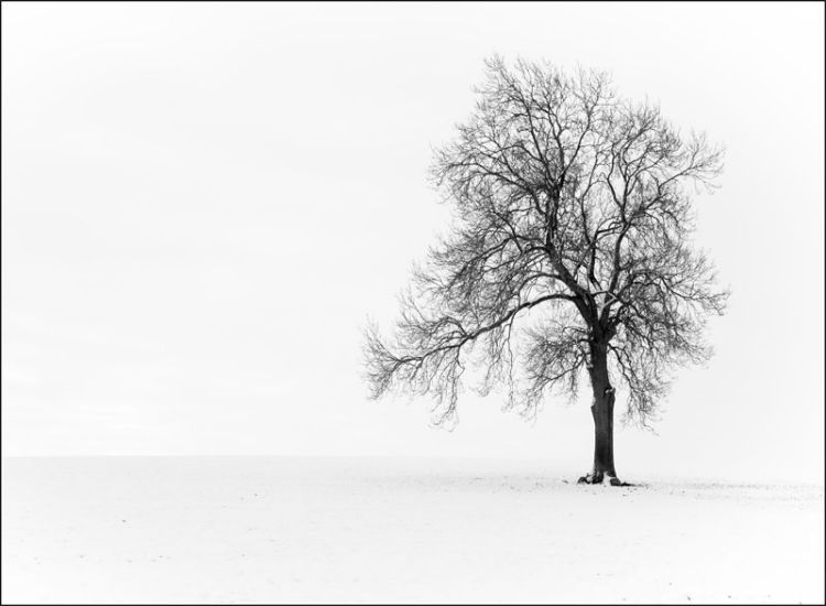 Solitary-Tree-in-Winter