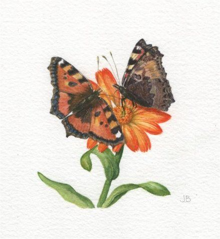 2 butterflies on a marigold