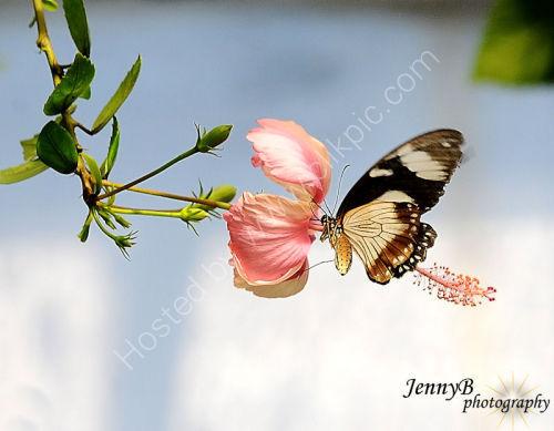 Butterfly in flower