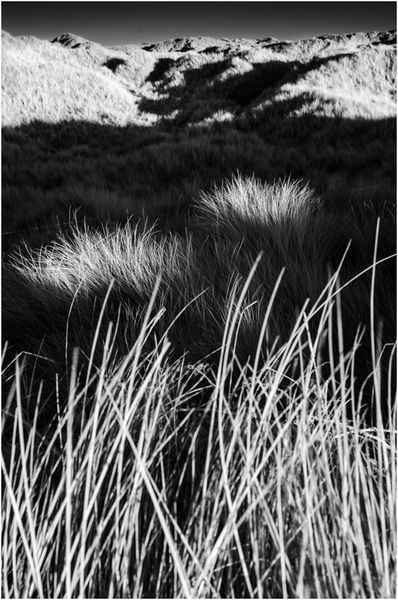 Marram spotlights