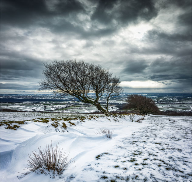 Lone tree on Exmoor
