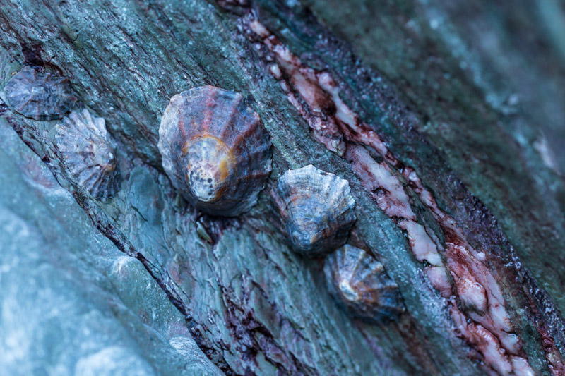 Limpet textures