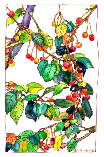 *Cherry Tree