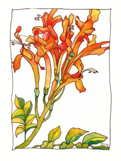 *Lanzarotte Flowers