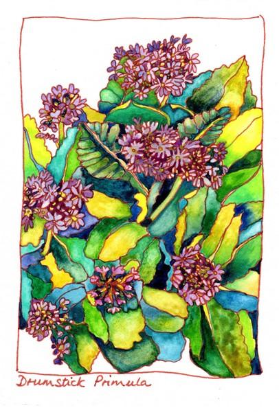 Drumstick Primulas on Orkney