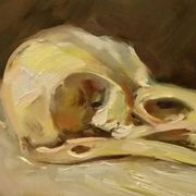Crow's  Skull - Vanitas