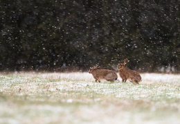 Frolics in the snow