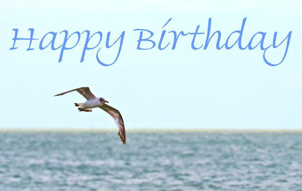 Birthday Gull