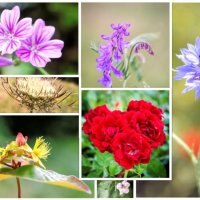 Wild flower collage