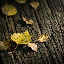 1 Autumnal colours