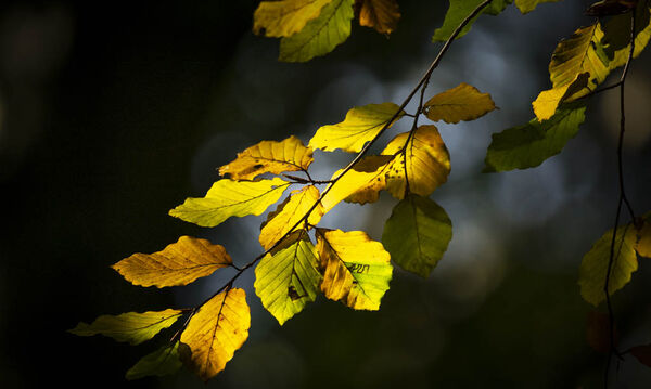 2nd. Autumnal colours. Brian Nattrass. Judge: The Members.