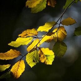 3 Autumnal colours