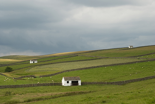 Three of a Kind - Teesdale.