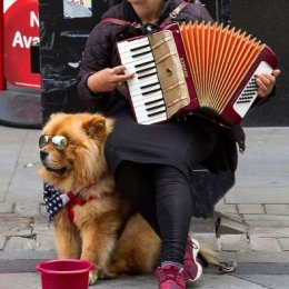 H.C. Busker and Dog. George Richardson. Judge: Ray Bell.