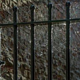 Cobwebs on the Gate