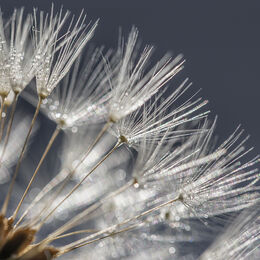 DANDELIONS: Well seen and an excellent idea. A little soft though with only top left corner reasonably in.