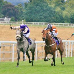 Horse Power(2)