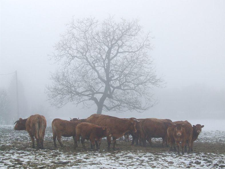 Misty Morning 1