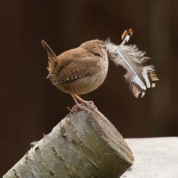 1st. Nesting time. John Stephenson. Judge: Ray Bell