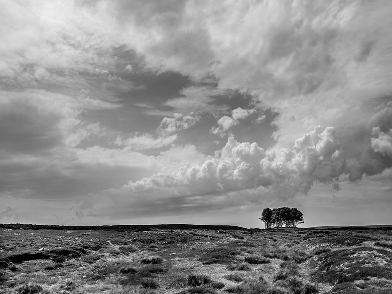 The Elephant Trees, Weardale