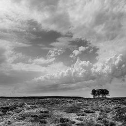 The Elephant Trees, Weardale