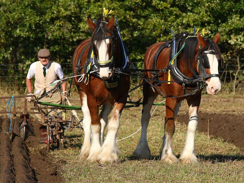 Working Horsepower