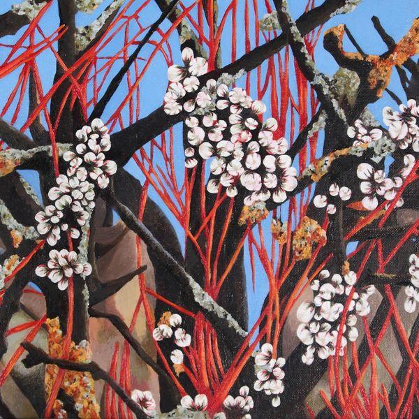 Blackthorn and Dogwood