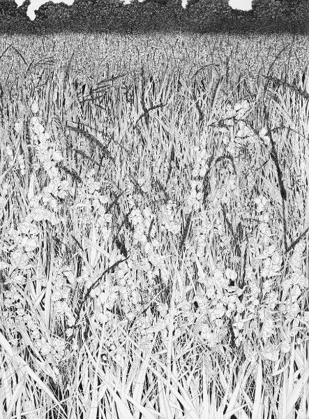 Hay Meadow - B&W