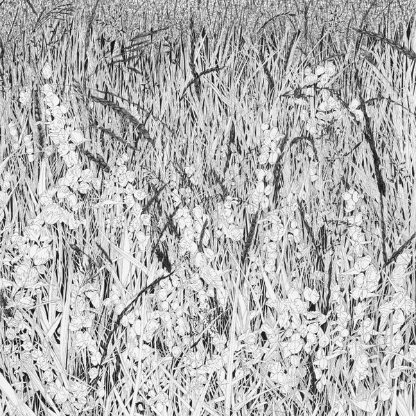 Hay Meadow - black and white