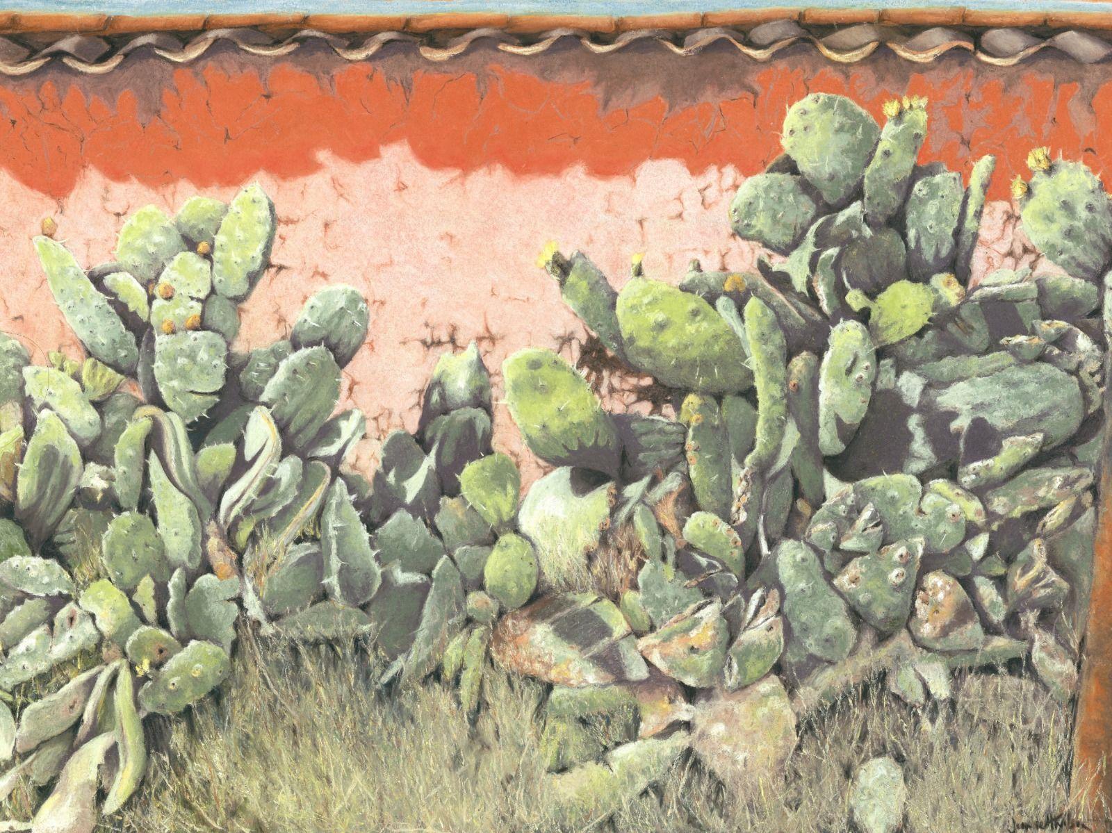 Cactus - Peru
