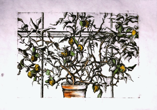 Etching (drypoint) - Lemon Tree